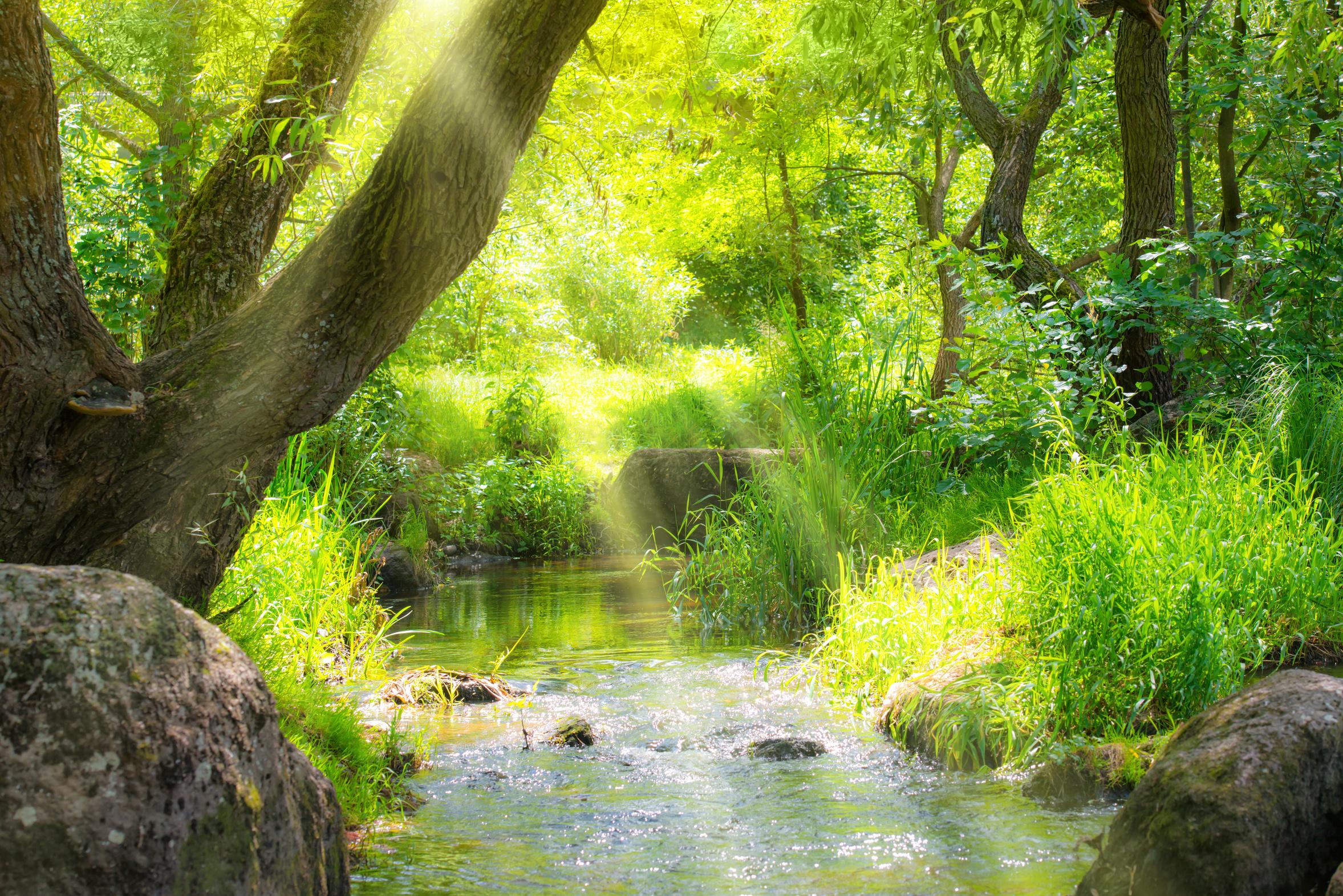 Entspannung, Natur und Glück mit ruhewerk