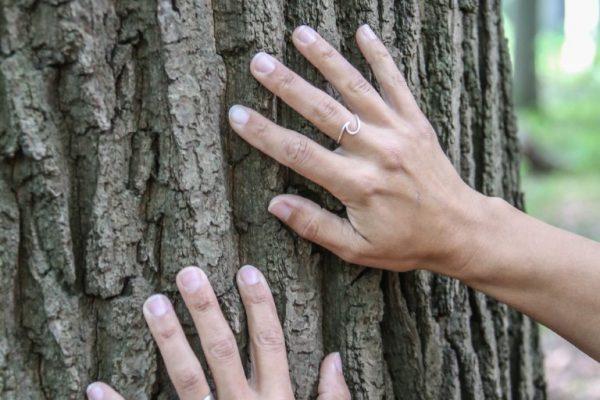 "Hannover, Ines Wegener erklärt, wie ""Waldbaden"" geht. Hinüberscher Garten  (Foto: Frank Wilde)"