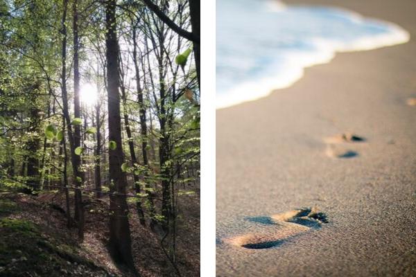 Wald und Meer